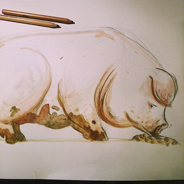 some #rough #animal #anatomy #practice today. #piggie #sketch
