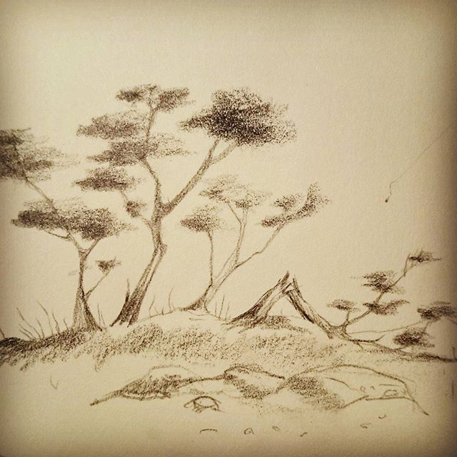 A little bit of #landscape #practice with some #scrawny #trees.